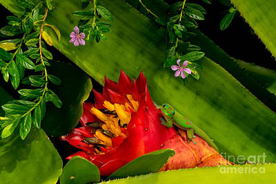 Photograph - Gecko Aloha All Proceeds Go To Hospice Of The Calumet Area by Joanne Markiewicz