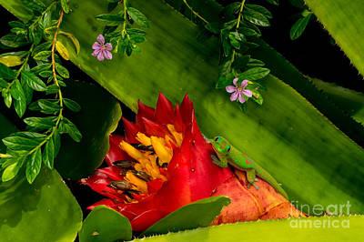 Photograph - Gecko Aloha All Proceeds Go To Hospice Of The Calumet Area by Joanne Markiewicz