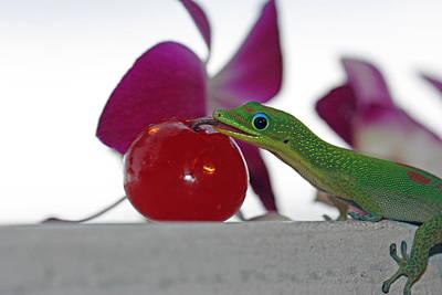Gecko And Cherry Art Print by Sue Mayor