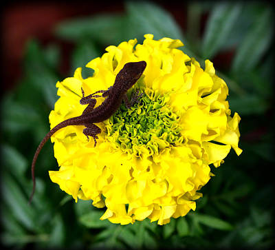 Gecko And Marigold Art Print