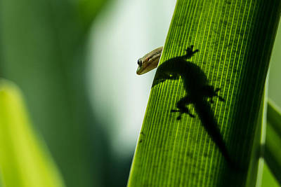 Photograph - Gecko In The Morning Sun by Mark Robert Rogers