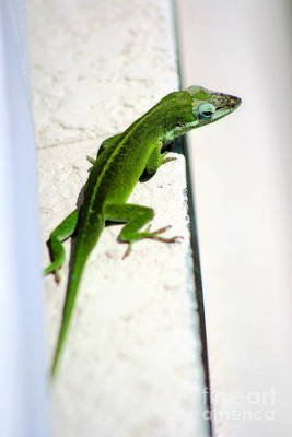 Photograph - Lizard On Stucco 2 by Angela Rath
