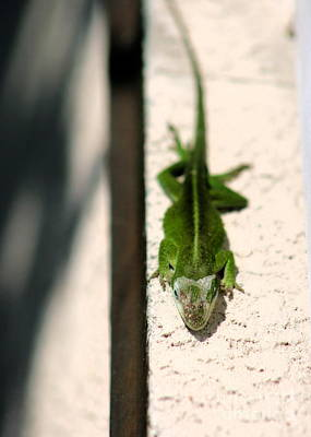 Photograph - Sunbathing Lizard by Angela Rath