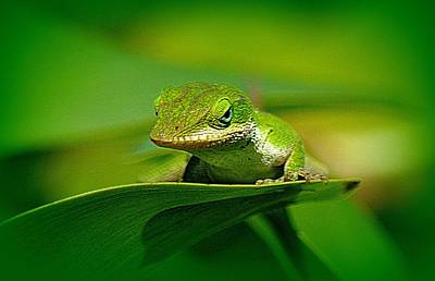 Photograph - Gecko Up Close by Lori Seaman