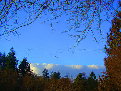 Photograph - Geese Across The Sky by Lisa Rose Musselwhite