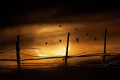 Photograph - Geese Against A Harvest Moon by Randall Nyhof