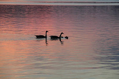 Photograph - Geese And Their Babies by Angela Murdock