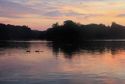 Photograph - Geese And Their Babies At Sunrise by Angela Murdock