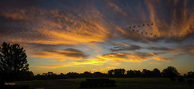 Photograph - Geese At Dawn by Philip Rispin