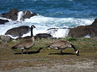Photograph - Geese At Glass Beach In Fort Bragg, Ca by Sara Raber