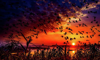 Photograph - Geese At Sunset by Pixabay