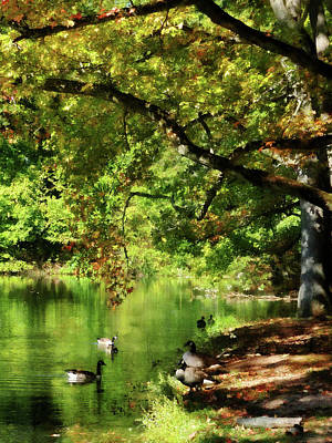 Geese By Pond In Autumn Art Print by Susan Savad