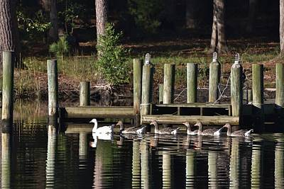 Photograph - Geese By The Docks by Kim Bemis
