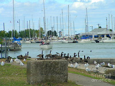 Geese By The Pier Art Print by Deborah Selib-Haig DMacq