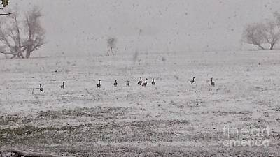 Photograph - Geese During The Snow Storm by Carole Martinez