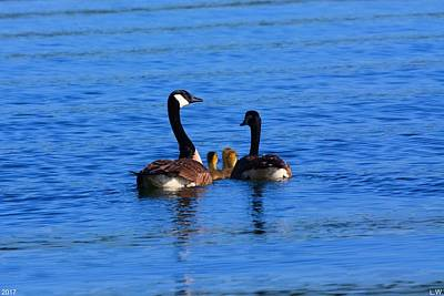 Photograph - Geese Family by Lisa Wooten