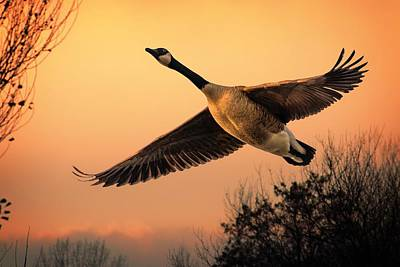 Photograph - Geese Fly By by Jeff S PhotoArt