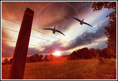 Photograph - Geese Fly Over A Field At Sunset by A Gurmankin