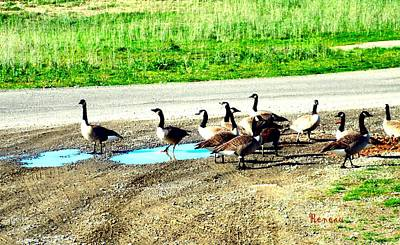 Photograph - Geese In Distress by Sadie Reneau