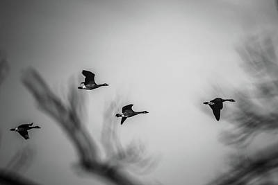 Photograph - Geese In Flight Abstract by Bruce Pritchett