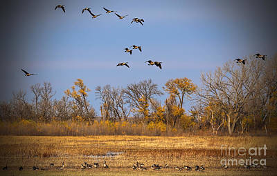 Photograph - Geese In Flight by Elizabeth Winter
