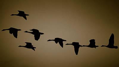 Claude Monet - Geese in flight by Jeffrey Stone