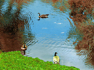 Photograph - Geese In Pond In Providence, Rip by Merton Allen