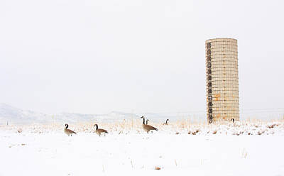 Geese In The Snow With Silo Art Print by James BO  Insogna