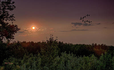 Photograph - Geese In The Sunset by Philip Rispin