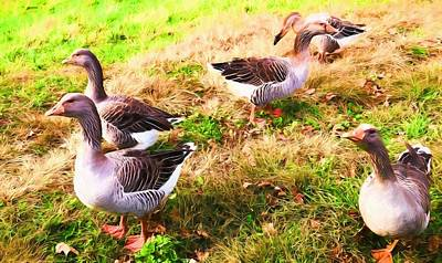 Photograph - Geese In The Yard by Alice Gipson