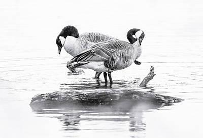 Photograph - Geese Island by Athena Mckinzie