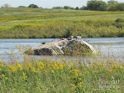 Photograph - Geese On A Boulder by Kathie Chicoine