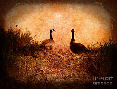 Photograph - Geese On A Hill by Laura Iverson