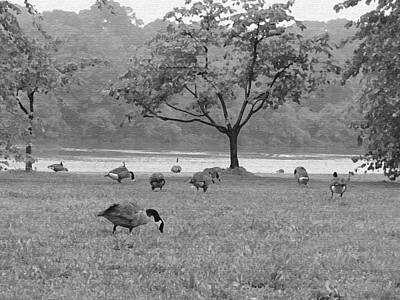 Museum Of Art Digital Art - Geese On A Rainy Day by Bill Cannon