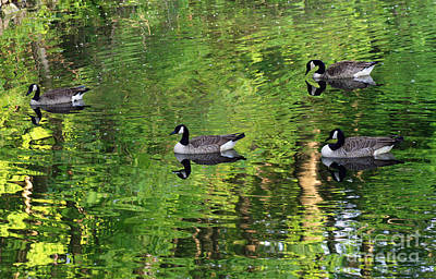 Photograph - Geese On Green Pond by Karen Adams