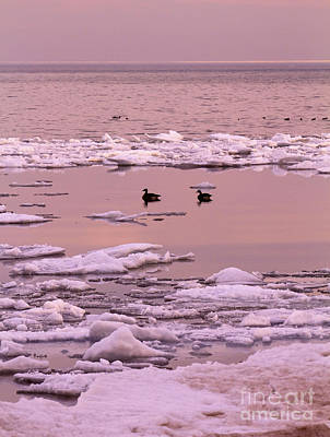 Photograph - Geese On Lake Huron At Sunset by Kathy DesJardins