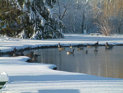 Geese On Pond Art Print by Gregory Jeffries