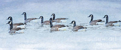 Goose Digital Art - Geese On Pond by Randy Steele