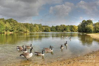 Photograph - Geese On The Lake Hdr by Vicki Spindler