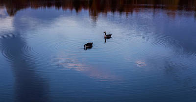 Photograph - Geese On The Lake Zen by Terry DeLuco