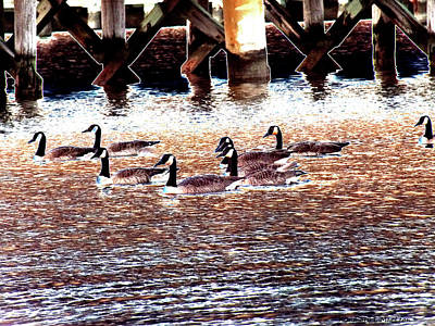 Photograph - Geese On The Water by Kimmary I MacLean
