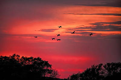 Photograph - Geese On Their Sunset Arrival by Dale Kauzlaric