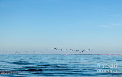 Photograph - Geese Over The Cape Cod Bay by Michelle Wiarda-Constantine