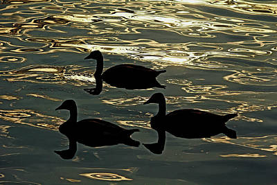 Photograph - Geese Silhouettes At Sunrise by Debbie Oppermann