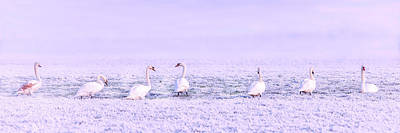 Photograph - Geese Surrounded By Hoarfrost by Pixabay