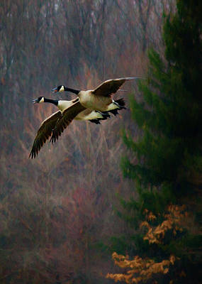Digital Art - Geese - In Formation by Ron Grafe