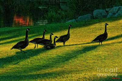 Photograph - Geese The Perfect Pattern by Blake Richards