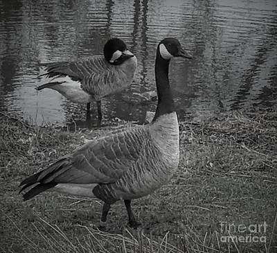 Photograph - Geese Together  by Luther Fine Art
