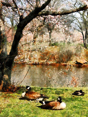Photograph - Geese Under Flowering Tree Closeup by Susan Savad