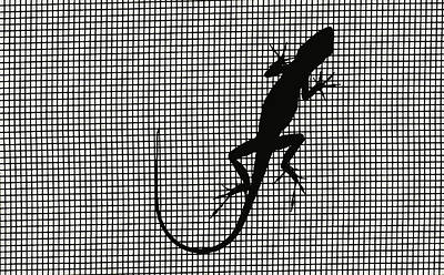 Photograph - Gekko On My Screen by Carl Purcell